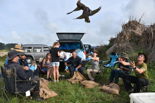 'Biggest ever' duck banding tally bodes well for game bird season