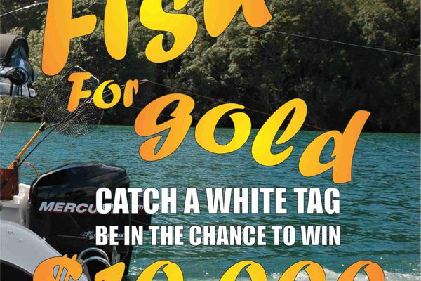 Fish for Gold 2019