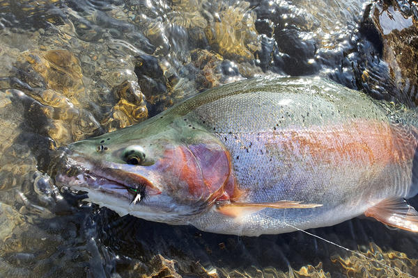 Fishing report for the North Canterbury Region Friday 14th February 2020