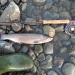 First trout caught fly fishing ,caught in ruamahunga river near masterton. Photo from Lochie Mcnab