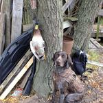 First couple of retrieves, opening weekend 2012 Photo from J