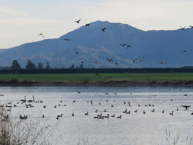BB June CSI 1 a typical mid Canterbury irrigation pond Credit R Adams