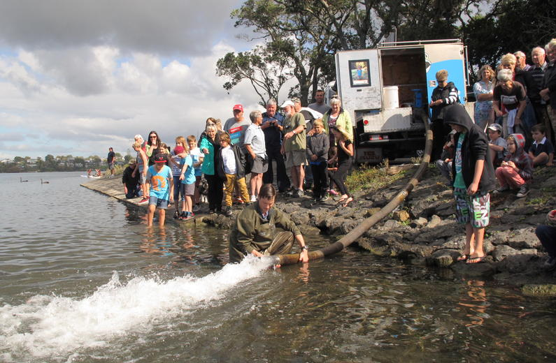 Children are capitivated by the sight of fish darting in all directions at the Lake Pupuke releases.