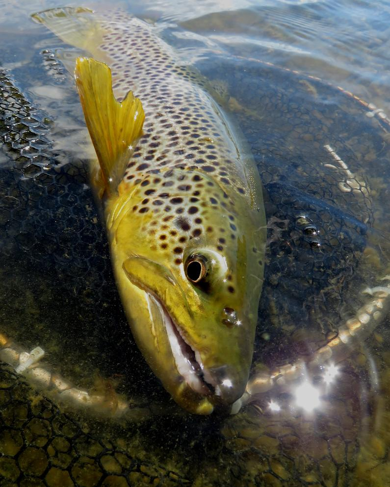 RLfeb19CSI1Great trout fishing and mild conditions await you in March credit Rhys Adams2