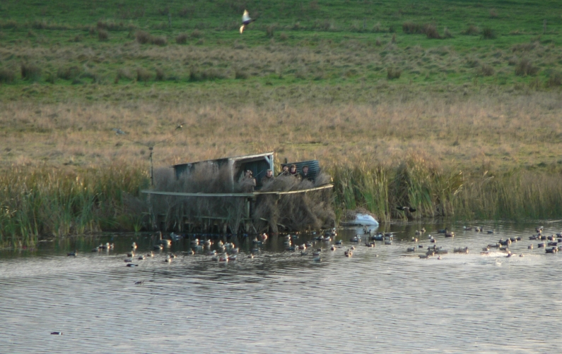 TBB1June2020. Hunters enjoy their opening morning at Lake Herengawe in the Waverley area.