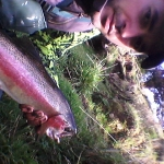 The moust beautiful fish I've seen with stunning colours !