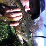 Stunning brown on a beautiful day!