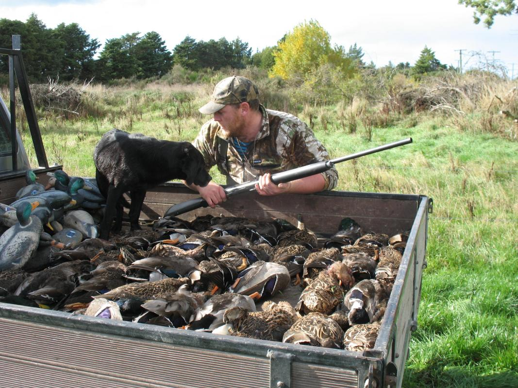 New Zealand Shooting Gallery: Hunting Image Gallery